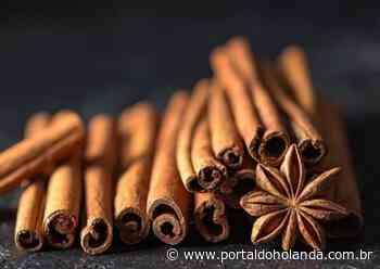 Chá de canela é poderoso aliado contra infecções; entenda - Portal do Holanda