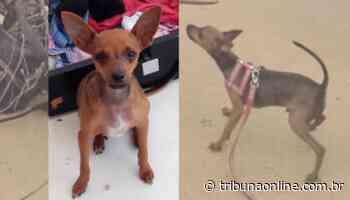Bandido rende aposentada e rouba cachorro na orla de Itaparica - Tribuna Online