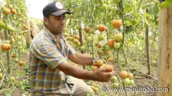 ¡Así es que es! Campesinos de Palmitas y San Cristóbal surtirán con cinco toneladas de frutas y hortal ... - Minuto30.com
