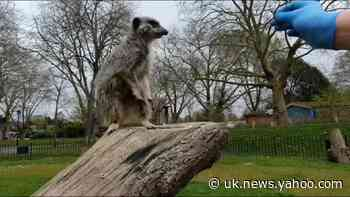 London Zoo's 'behind the scenes' diaries during coronavirus shutdown