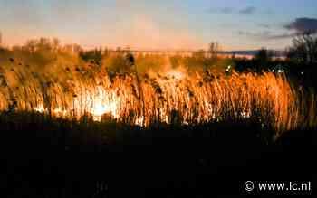 Stuk riet in brand langs de N351 bij Nijetrijne - Leeuwarder Courant