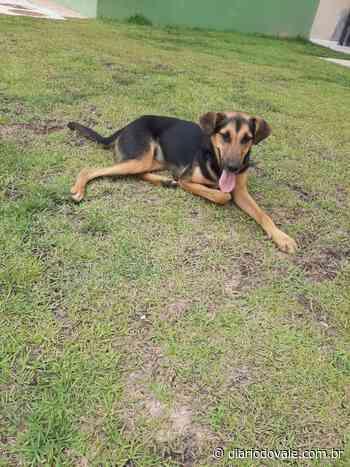 Internauta procura por cachorra desaparecida em Volta Redonda - Diario do Vale