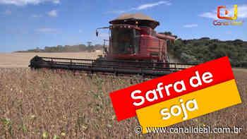 Abelardo Luz deve ter neste ano uma das maiores safras de soja - Canal Ideal