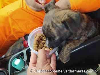 Bombeiros de Juazeiro do Norte adotam filhote de cachorro resgatado de bueiro - Diário do Nordeste
