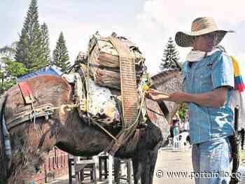 Moniquirá, el pueblo colombiano que huele a guayaba - m.portafolio.co