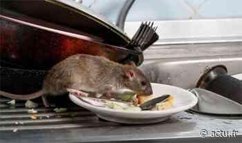 Yvelines. Sartrouville : en confinement dans un logement envahi par des rats, cette mère de famille appelle à l'aide - actu.fr