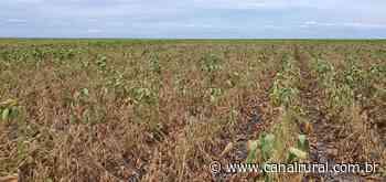 Soja: seca no Rio Grande do Sul diminui projeção de safra no Brasil - Canal Rural