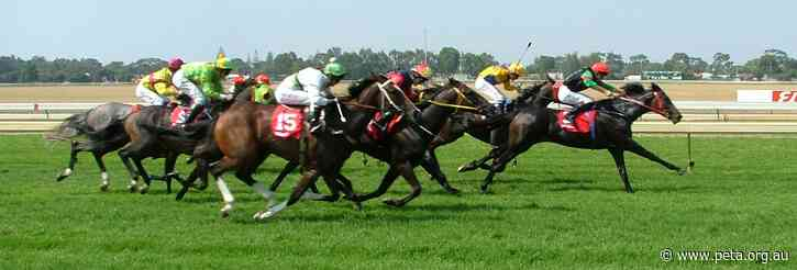 Why Are Horse and Greyhound Races Still Going Ahead During the COVID-19 Lockdown?