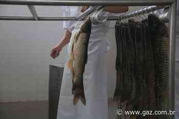 Associação planeja vender dez toneladas de pescado - GAZ - Notícias de Santa Cruz do Sul e Região - GAZ