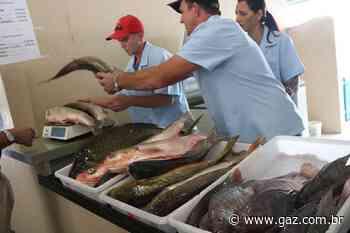 Em Santa Cruz, peixes serão vendidos nas Feiras Rurais - GAZ
