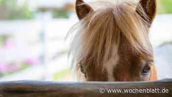 Ausgebüchste Pferde laufen auf die Staatsstraße – 10.000 Euro Schaden, ein Tier tot - Wochenblatt.de