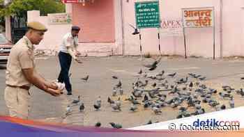 Pemerintah Jaipur Bagikan 15 Ribu Makanan untuk Hewan Liar Selama Lockdown - Detikcom
