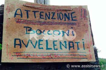 Bocconi killer a Viole di Assisi, avvelenato un altro cane: l'emergenza va avanti da un mese - Assisi News