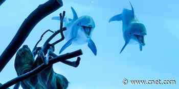 Aquarium coronavirus lockdown gives dolphins chance to meet a sloth     - CNET