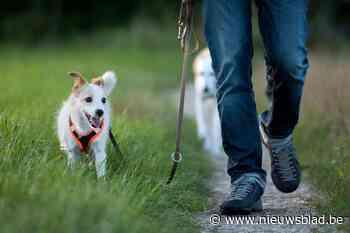 Buurtbewoners vragen meer controle op loslopende honden in Kluisbos - Het Nieuwsblad