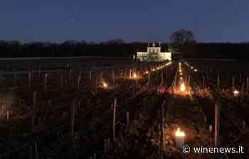 Francia, le gelate colpiscono Borgogna, Loira e Rodano, ma senza fare danni - WineNews