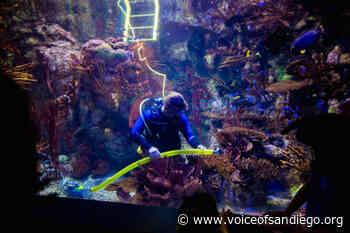 Empty Aquarium Is Good News for Shy Fish - Voice of San Diego