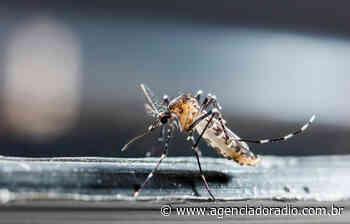 Pirassununga (SP) possui comitê de combate ao mosquito Aedes aegypti - Agência do Rádio Mais