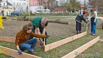 """Projekt """"essbare Stadt"""": Möhren-Ernte am Schlosspark - Potsdam - Startseite - Potsdamer Neueste Nachrichten"""
