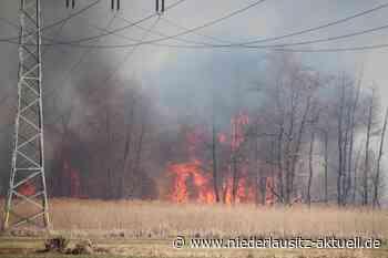 Wald- und Flächenbrand bei Kolkwitz. Zahlreiche Feuerwehren im Einsatz - NIEDERLAUSITZ aktuell
