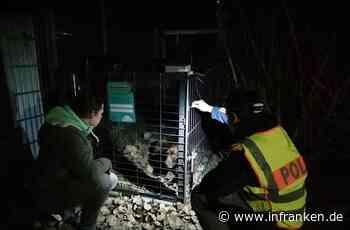Entlaufen oder ausgesetzt? Lebendfalle für Labradorhündin in Franken aufgestellt