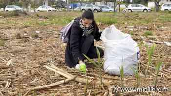 Montpellier : Citoyens pour le climat propose le clean challenge, mon kilomètre à moi - Midi Libre