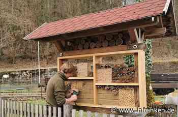 Ranger in der Fränkischen Schweiz zeigen: So baut man ein Wohnhaus für Wildbienen