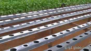 Produtores rurais de Mogi das Cruzes criam vaquinha online para manter a produção - G1