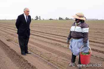Marcelo Rebelo de Sousa visita sementeira de tomate em Vila Franca de Xira - Lux