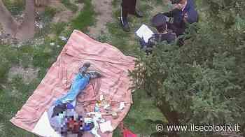 Albissola Marina, picnic nell'aiuola: intervengono vigili e carabinieri - Il Secolo XIX