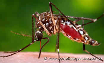Serra registra 2 mil moradores infectados por dengue e intensifica combate - Portal Tempo Novo