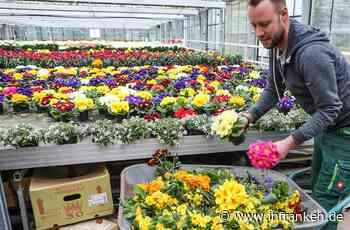 Gärtnereien im Kreis Forchheim bangen um ihre Zukunft: So kommen Sie an Frühlingsblumen - inFranken.de