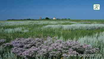 Umwelt: Nationalpark Hamburgisches Wattenmeer feiert 30. Geburtstag