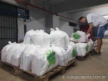 Lajeado arrecada mais de 200 cestas básicas para entregar a famílias vulneráveis - independente