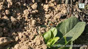 Natur: Warum sich Insekten jetzt am U-Bahnhof Schlump wohlfühlen