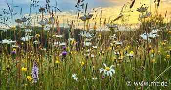 Trio aus Bad Oeynhausen bietet Patenschaften für Blumenwiesen an | Regionales - Mindener Tageblatt