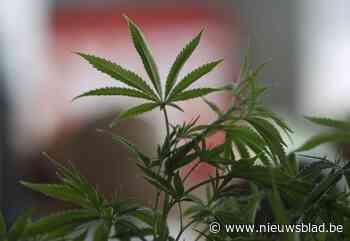 Politie ontdekt cannabisplantage in rijwoning (Mechelen) - Het Nieuwsblad
