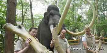 Rehburg-Loccum - Überreste vom Mammut: Dino-Park lässt Eiszeit aufleben - Lübecker Nachrichten