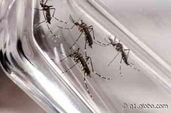 Morte por dengue é investigada em Patos de Minas; veja situação de outras cidades do Triângulo, Alto Paranaíba e Noroeste de MG - G1