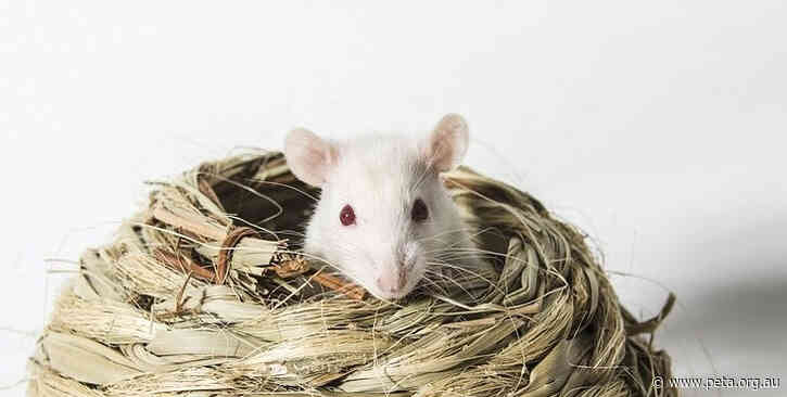 Ways COVID-19 Researchers Are Avoiding Archaic Tests on Animals
