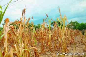 Prejuízos na agricultura aumentam no Vale do Rio Pardo - GAZ