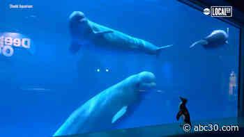 Watch penguins stroll through the aquarium