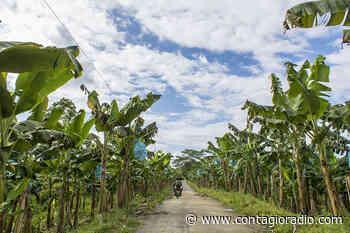 Comunidades del Bajo Atrato denuncian alza de precios y actividad bananera en medio de la cuarentena - Contagio Radio