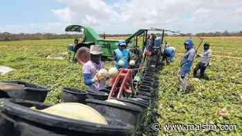 Sem demanda externa, produção de frutas do Ceará pode ser afetada - MaisFM