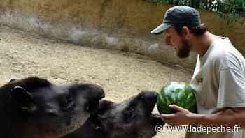 Plaisance-du-Touch. Zoo African Safari : des animaux traités avec soin - LaDepeche.fr