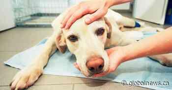 Coronavirus: Humane society opening emergency pet food banks in Kitchener, Stratford