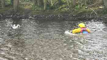 RSPCA inspector swims out into lake to rescue drowning gull - ITV News