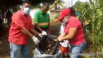 Emprenden campaña para controlar el caracol africano en Tesalia - Noticias
