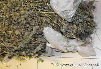 Dal controllo Covid spunta la fabbrica della droga - Qui News Firenze