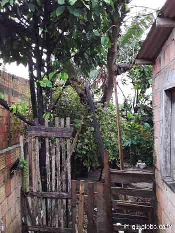 Chuva provoca queda de árvores e desabamento nesta quinta-feira em Manaus - G1